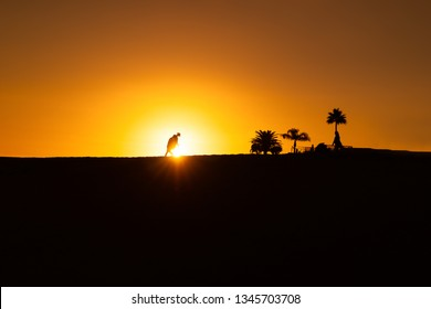 maspalomas dunes, gran canaria, spain, sunset with shadow silhouetes of people in front of sunball