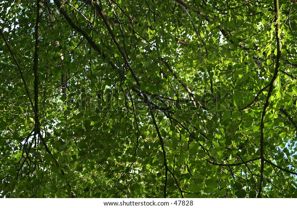 A mass of branches and leaves. Ideal for use as a background.