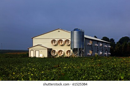 mass production modern poultry farming shed