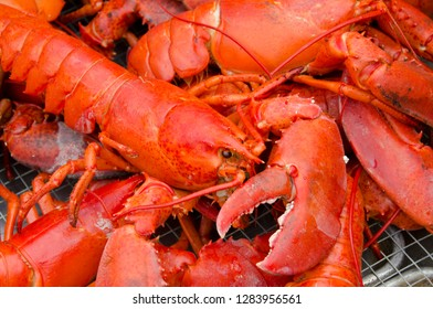Massachusetts, Martha's Vineyard. Traditional New England whole steamed lobster bake.