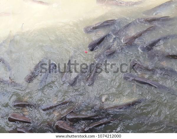 Cuda Fish Measurer