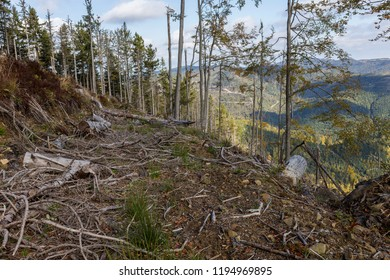 Massive deforestation. Natural disaster in the Carpathians. large deforestation in the Carpathian Mountains. Carpathian mountains, problems ecology, illegal deforestation, Ukraine.