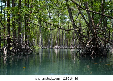 Massive mangrove trees make up extensive forests in the Mergui Archipelago in Myanmar, just above the border of Thailand.  This region is in the Andaman Sea and is home to sea gypsies called Moken.
