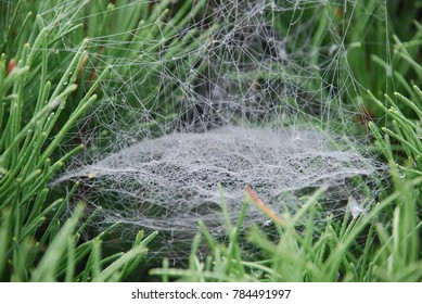 Massive spider's web in all kinds of dimensions in Norwegian pine needles, natures own pattern