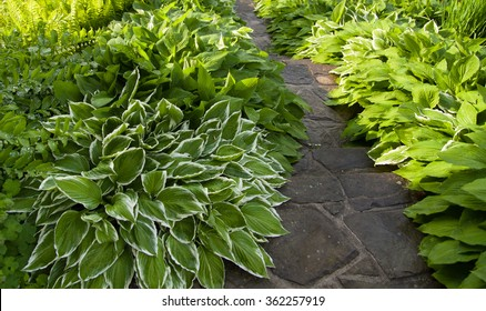 massive stone stairs within green and white leaves of hosta