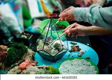 Master class on planting succulents in the florarium of glass and metal. The Floriana. Girls plant plants. Hands of the girl close-up. Making a gift and a piece of interior handmade. DIY present