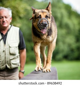 Master and his obedient (German shepherd) dog at a dog training center