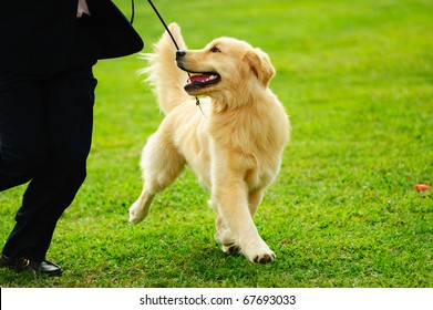 Master playing with his little golden retriever dog on the lawn