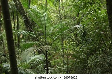 Mata Atlantica rainforest in Brazil. Serra dos Orgaos national park.