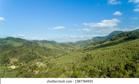 Mata Atlantica remains in Brazil, in Santa Catarina, with blue sky and many trees with bright green and few clouds. One of the beauties of nature.