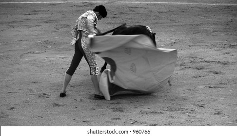 matador leads bull into a graceful pass at a bullfight in spain