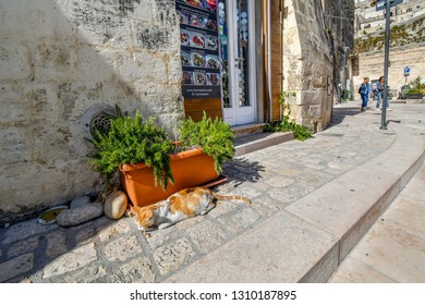 Matera, Italy - September 27 2018: A stray orange and white cat eats dry food from the sidewalk pavement in front of a cafe in the ancient city of Matera, Italy.