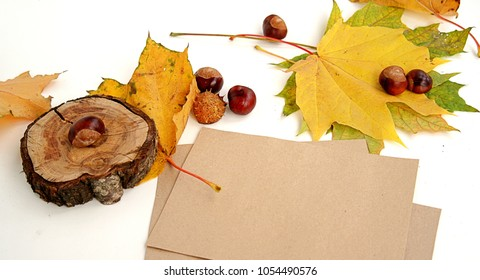 Materials for creating autumn postcards. Maple leaves, chestnuts, saw tree, craft paper