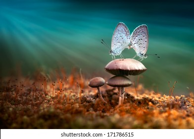 Mating Butterflies on mushroom with blue background and sunrays