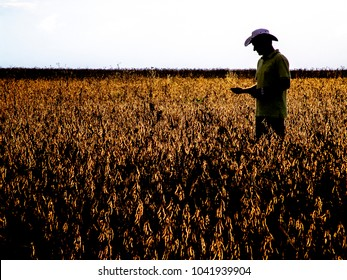 Mato Grosso, Brazil, March 01, 2008. Silhouette of an agronomist analyzing plants in a soybean crop in Brazil