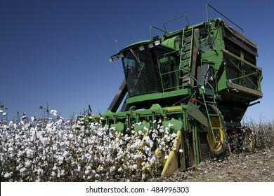 MATO GROSSO DO SUL, MT, BRAZIL - CIRCA  JULY, 2008 - cotton plantation for industrial use