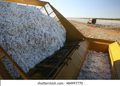 MATO GROSSO DO SUL, MT, BRAZIL - CIRCA  JULY, 2008 - cotton plantation for industrial use