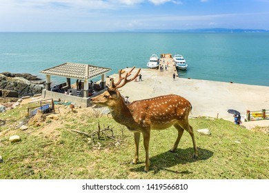 Matsu, Taiwan-September 22, 2018 : Rehabilitation Of The Formosan Sika Deer in A Small Island - Daqiu (Deer Watching Paradise)