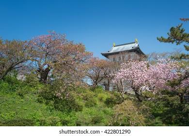 matsumae castle sakura