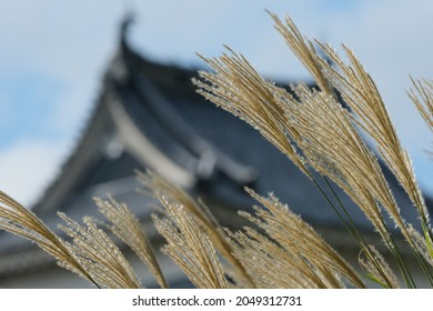 Matsumoto Castle with Autumn leaves, Japanese old style Castle.