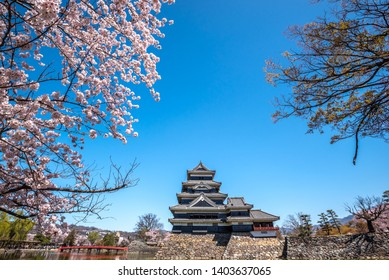 Matsumoto Castle During Cherry Blossom , Nagano Prefecture, Japan