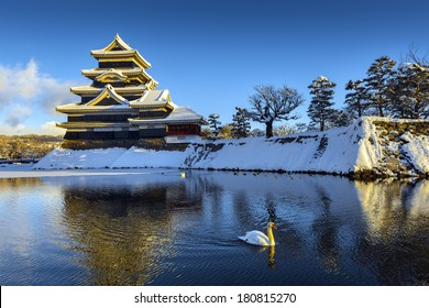 Matsumoto Castle and White Swan in the winter