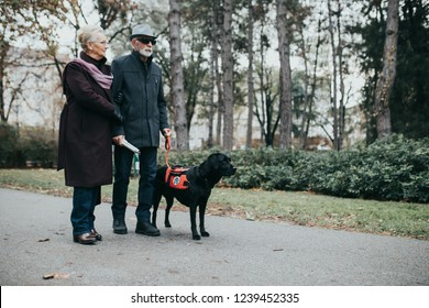 Mature blind man with a long white cane walking in park with his wife and guide dog.