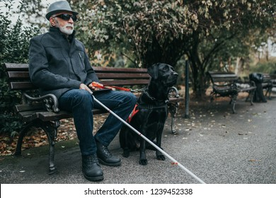 Mature blind man with a long white cane enjoying in park with his guide dog.