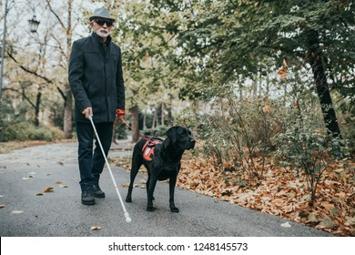Mature blind man with a long white cane walking in park with his guide dog.