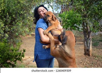 Mature Caucasian woman chooses a South African Mastiff dog in a kennel. She picks up one 3 months Boerboel puppy. Another 1-year-old bitch stands on hind legs asking to pick it up too.