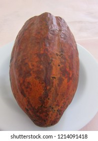 Mature cocoa placed longitudinally on a white plate, viewed from above