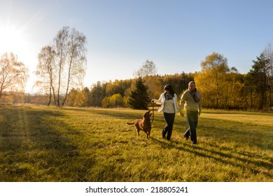 Mature couple holding hands walk retriever dog autumn sunset countryside meadow