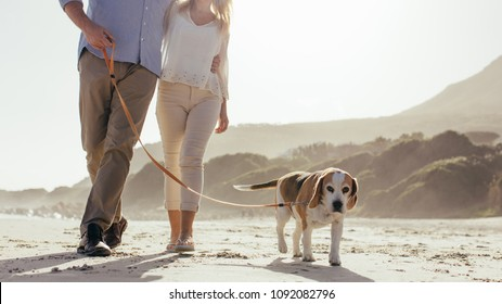 Mature couple walking their pet dog on the beach. Dog walking on the beach with couple in morning.