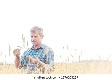 Mature farmer examining crop on field against sky at farm