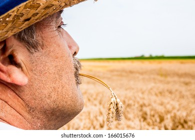 Mature farmer looking and worries about his crop.