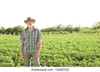 Mature farmer standing in field with green plants