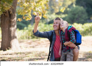 Mature father pointing up to boy in forest