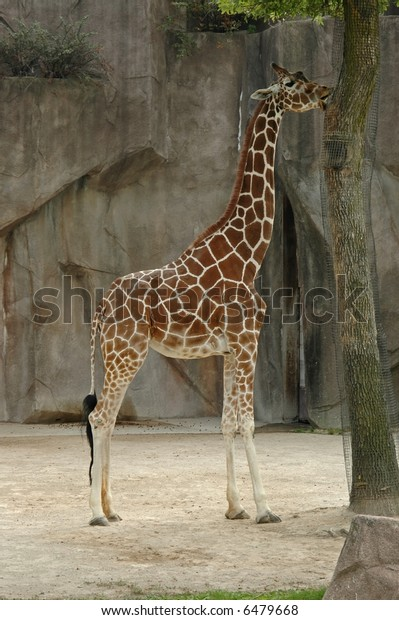 mature zoo
