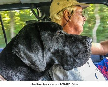 Mature gray haired man wearing dirty baseball cap driving with his loyal black Great Dane dog resting his weary head on his shoulder, selective focus on foreground with blurred background