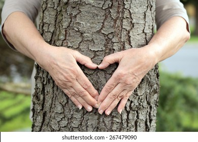 Mature hands forming a heart over on a live tree. Environmental concept.