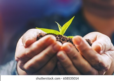 Mature human hands are holding the new  plant with abstract blue background. For preserve the environment of reforestation.