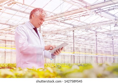 Mature male biochemist using digital tablet in plant nursery