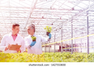 Mature male biochemists discussing over seedlings while standing in plant nursery