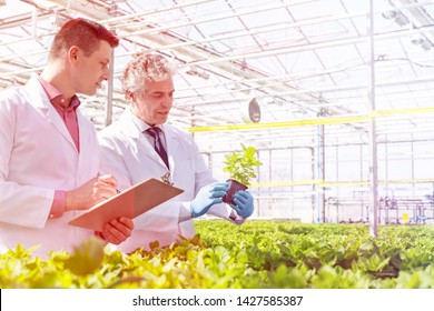 Mature male biochemists discussing over herb seedlings in plant nursery