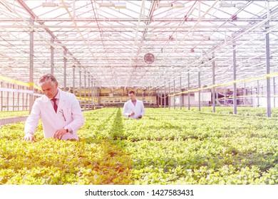 Mature male biochemists examining seedlings in plant nursery