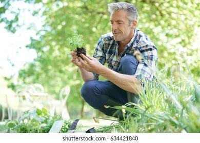 Mature man in garden planting new flowers