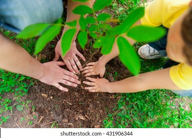 Mature man and grandson planting small tree