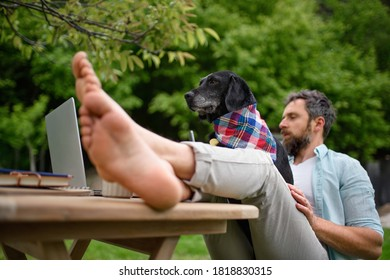 Mature man with laptop and dog working outdoors in garden, home office concept.