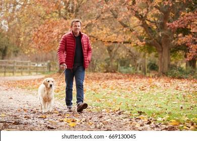 Mature Man On Autumn Walk With Labrador