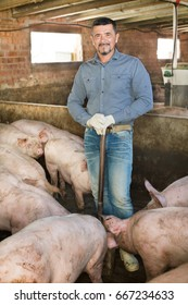 Mature man working on the animal farm and standing with pigs in the hangar